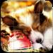 Dogs Tile Puzzle v5.0.1 [MOD]